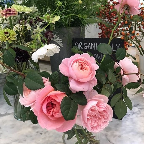 So looking forward to our first pick your own afternoon in the cutting garden at the farm later today. Full details are in my bio #pickyourown #organic #englishroses #floristry @daylesfordfarm