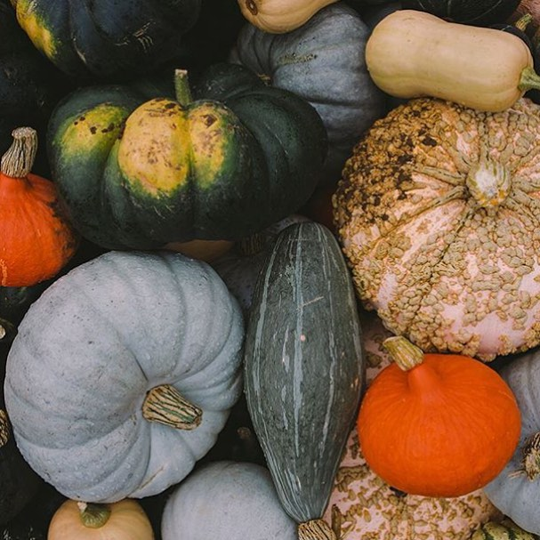 Just one week to go until our harvest festival - celebrating organic food, farming and the work of our busy bees #harvest #festival #autumn #cotswolds @daylesfordfarm