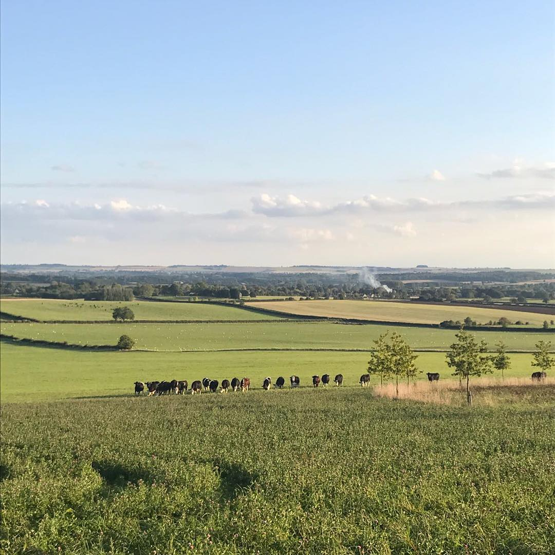 A beautiful evening at the farm. Looking forward to celebrating the bounty of the land at our harvest festival tomorrow @daylesfordfarm #organic #farming #harvest #festival #nurturenature #saveourbees