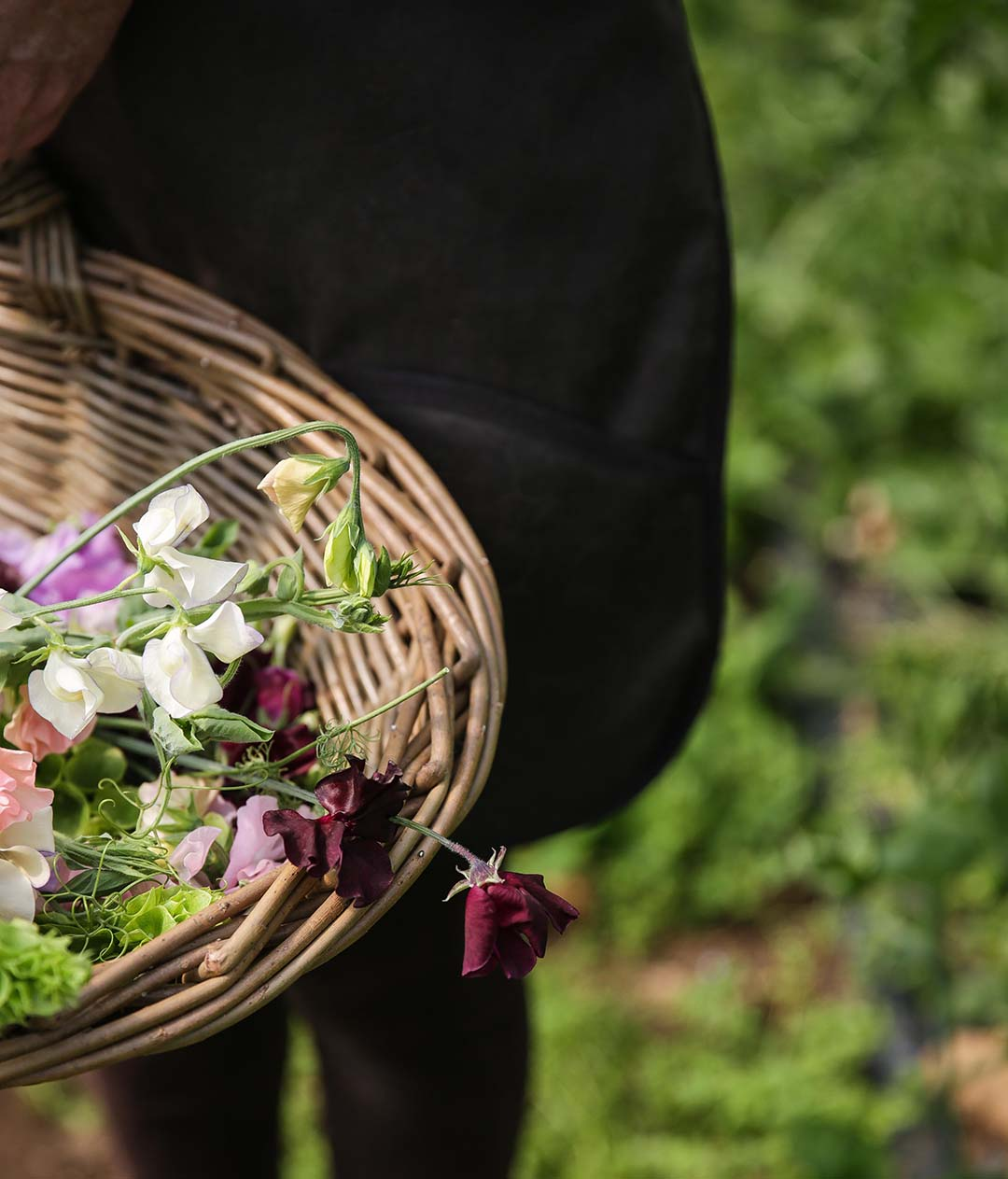 Basket of sweet peas