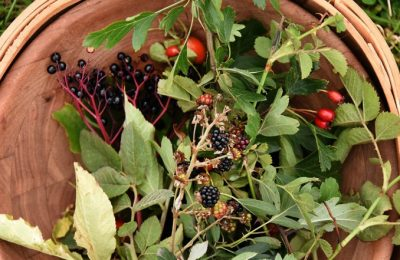 Foraged-Basket