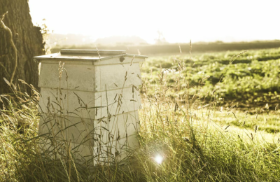 Daylesford Honey