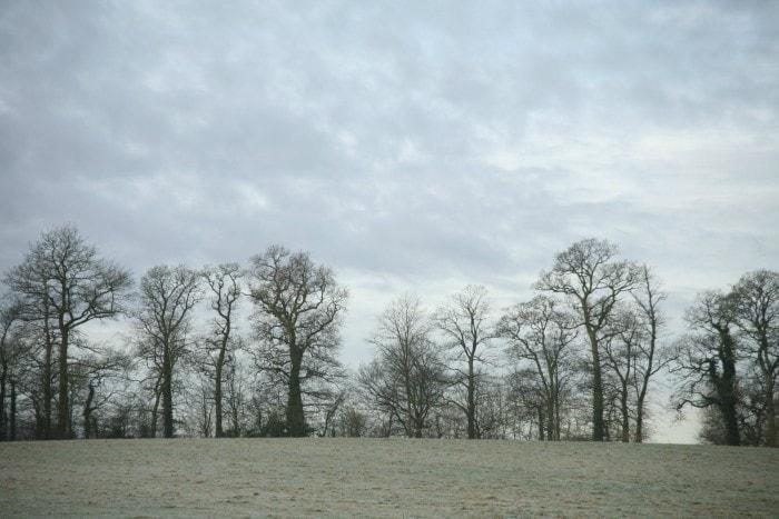 Fields(4)-min